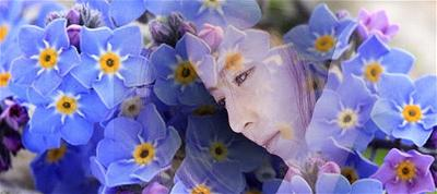 yeu - forget-me-not